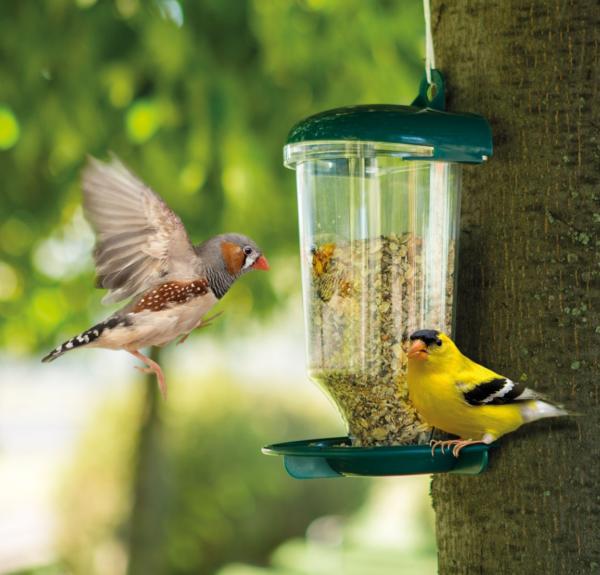 Voederhuis Vogels met Zuignap en Gat